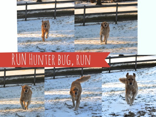 HunterRun